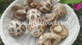 High Quality Dried Deep White Flower Mushroom Supplier