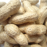 Export Good Quality Fresh Chinese Peanuts in Shell