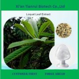Best Price Loquat Leaf Extract for Sale