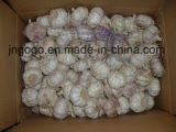Fresh Garlic (5.5cm and up)