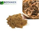 Wholesale Price Plant Extract Grifola Frondosa Maitake Mushroom Extract Powder