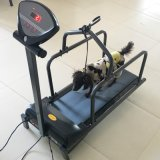 Pet Exercise Using Treadmill with High Strength