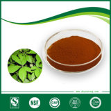 Nettle Root Extract or Nettleorganic Silicone & Urtica Cannabina L