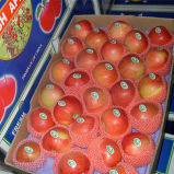 Sweet Red Gala Apple in 20kg Carton