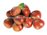 2016 Chinese Organic Fresh Chestnut