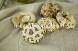 Wholesale Dehydrated Vegetable Bulk Dried White Flower Mushroom Prices