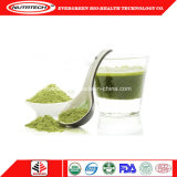 Wholesale Plant Based Vegan Natural Organic Hemp Protein Powder