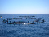 HDPE Fishing Cage Floating Fish Farming Cage for Sea Aquaculature