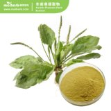 Factory Wholesale 100% Pure Natural Herbal Plant Asiatic Plantain Herb Extract for Diuretic Therapy