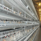 H Type Layer Cage with Auomatic Drinking and Enclosed Feeding System