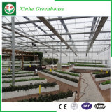 Hydroponic System with Polycarbonate Sheet Greeenhouse