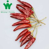 China Dehydrated Veggies Factory Hot Wholesale Red Chili Pepper Ring with High, Nuisanceless Dry Chili, Chili Pepper