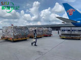 Air Freight Cargo Agent From China to Itajai Best Shipping Agent Service