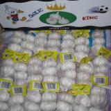 Fresh White Garlic for Wholesale