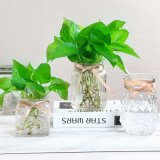 Free Sample European Contracted Glass Bottle Flower Vase for Decoration