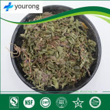 Dandelion, Traditional Chinese Medicine with Competitive Price