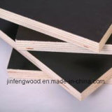 Poplar Core Plywood with Fair Price