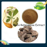 Pure Natural Rehmannia Glutionsa Root Extract