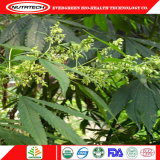Wholesale Industrial China Hemp Seed Price Very Good