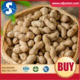 New Crop Peanut in Sh. Ell Healthy Delicous Luhua Haihua