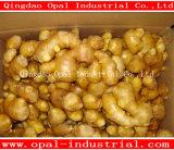 Wholesale High Quality China Fresh Ginger