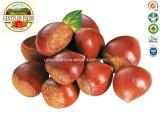 2019 New Season Chinese Fresh Chestnut 30-40 40-50 40-60 60-70 Wholesale Price