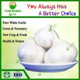 Wholesale China New Crop Pure White Garlic Fresh Garlic Price