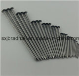 High Quality Professional Cheap Common Nails Sizes