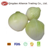 Fresh Purple White Peeled Onion with Top Quality