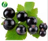 Organic Black Currant Oil Manufacturer