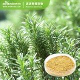 25% Rosmarinic Acid Rosemary Extract