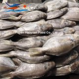 Exporting Frozen Seafood Pomfret