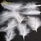 Double Washed Goose Feather/Goose Down/Feather Down