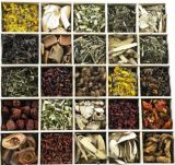 Natural Plant Extract and Herbal Extract for Foods, Beverage, Cosmetics