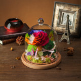 Preserved Flower for Holiday Decoration Gift