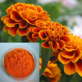 5%-10% Marigold Extract (Lutein) for Eye Health