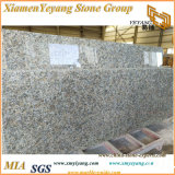 Yellow Butterfly Granite Kitchen Countertop/Tops/Prefab