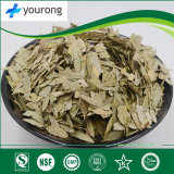 Sanna Leaf, Traditional Chinese Medicine with High Quality and Competitive Price