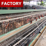 Wholesale Price Poultry Cage Layer Chickens with High Quality
