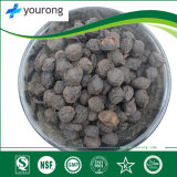 Black Plum, Natural and Healthy Medicine with Competitive Price