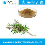 Natural Plant Motherwort Extract/Motherwort Herb P. E/Herba Leonuri Powder Stachydrine 98%