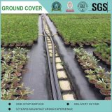 PP Ground Cover/Weed Mat/Weed Barrier Fabrics with Ruted Square