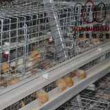 A Frame Layer Chicken Cage