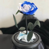 Christmas Gifts & Crafts Preserved Rose in Glass Dome on Wooden Base