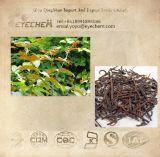 Ramulus Uncariae Cum Uncis / Gambir Plant Extract / Aharpleaf Ucaria Stem with Hooks Extract
