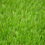 Goodlooking Synthetic Grass for Balcony (CS)