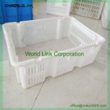 up-to-Date Styling Seafood Plastic Ventilate Crate for Fish
