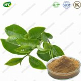 Natural Tea Polyphenol 98% Green Tea Extract Powder Green Tea Extract with Best Price
