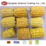 IQF Frozen Sweet Corn Cobs for Exporting