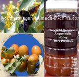 Honey,Top Wild Elaeagnus Angustifolia/King of Honey,Rare,Precious Anticancer, Beauty Skin,Antiaging, No Pollution,No Heavy Metal,No Antibiotics,Nourish Blood